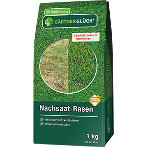 Nachsaat-Rasen