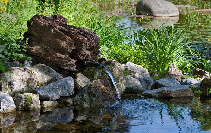 Unser Teich-Ratgeber auf www.raiffeisenmarkt.de