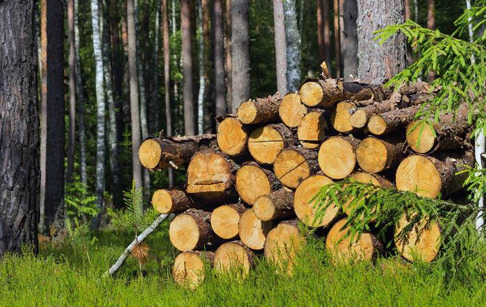 Alles rund um das Thema Heizen mit Holz