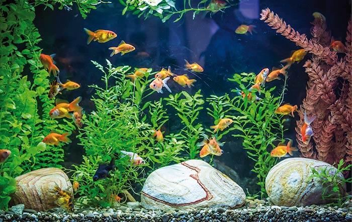 Einrichtung/Anschaffung eines Aquariums