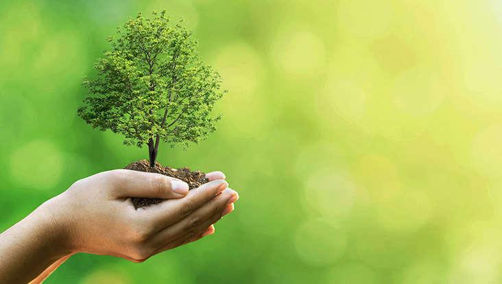 Baum pflanzen in sieben einfachen Schritten | Raiffeisen Ratgeber