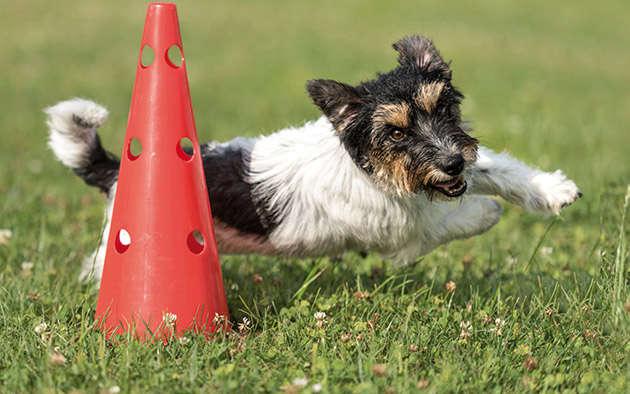 Crossdogging – aktiver Hundesport zwischen Hund und Hundehalter