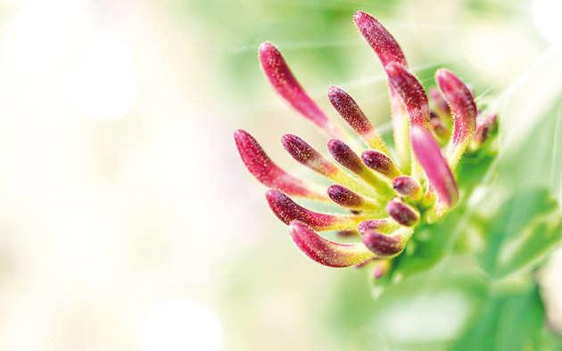 Bienenfreundlich Gärtnern – Bienen in den Garten locken