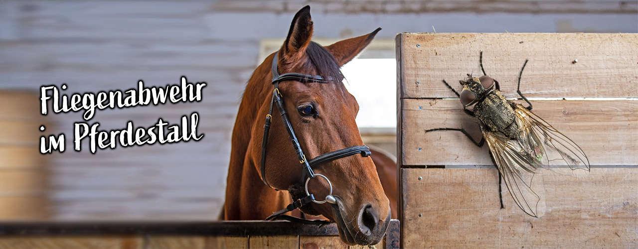 Alles für die Fliegenabwehr beim Pferd
