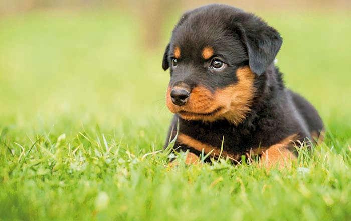 Unser Hunde-Ratgeber auf www.raiffeisenmarkt.de