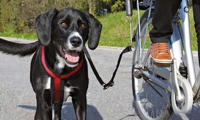Mit dem Hund sicher im Auto und am Rad unterwegs