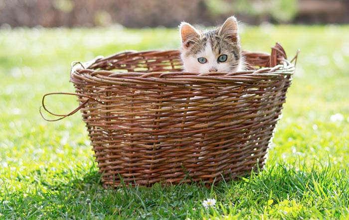 Unser Katzen-Ratgeber auf www.raiffeisenmarkt.de