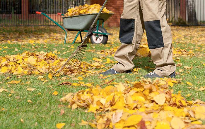 Warum wird im Februar der Rasen von Laub und Zweige befreit?
