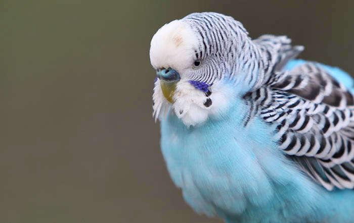 Unser Vogel-Ratgeber auf raiffeisenmarkt.de