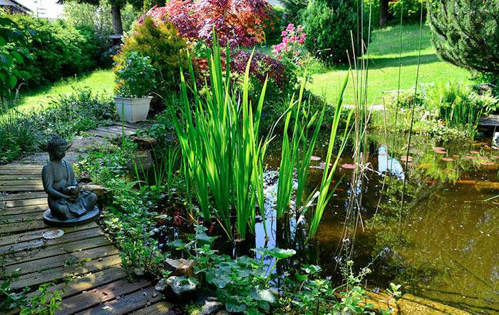 Teichanlage planen und gestalten