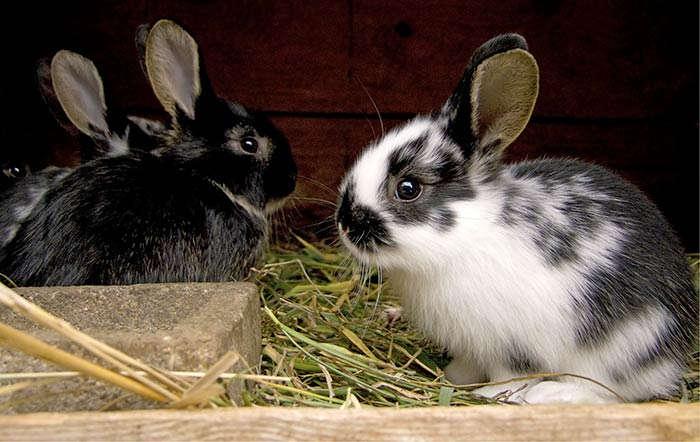 Wie werden Kaninchen in Gehege oder Stall richtig gehalten