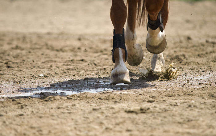 Besondere Pflege der Pferdehufe und Fesseln im Herbst