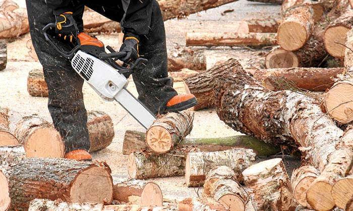 Wie wird Holz selber geschlagen und was gibt es dabei zu beachten?
