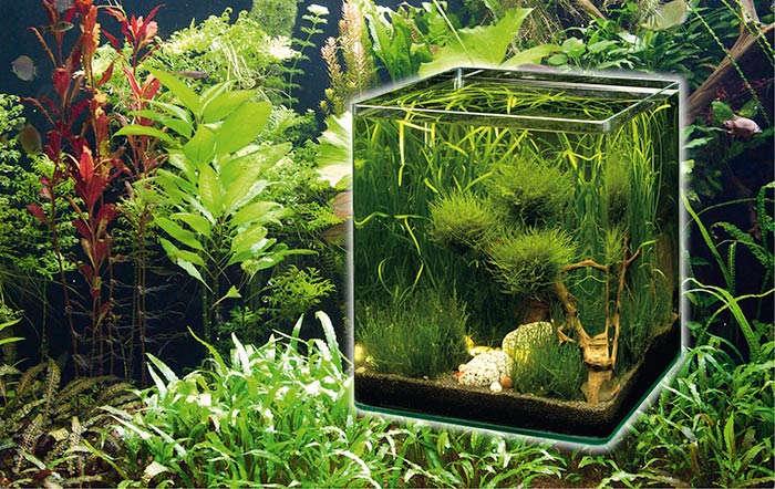 Wasserwelt in Miniformat