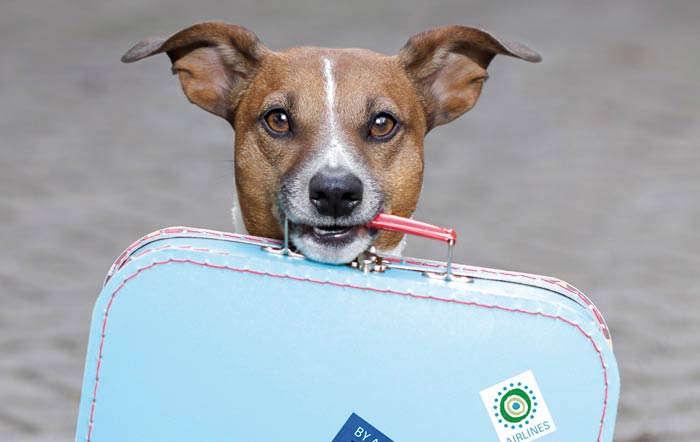 Hunde- und Katzenbetreuung während des Urlaubs