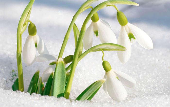 Garten winterfest machen - Vorbereitung auf den Winter