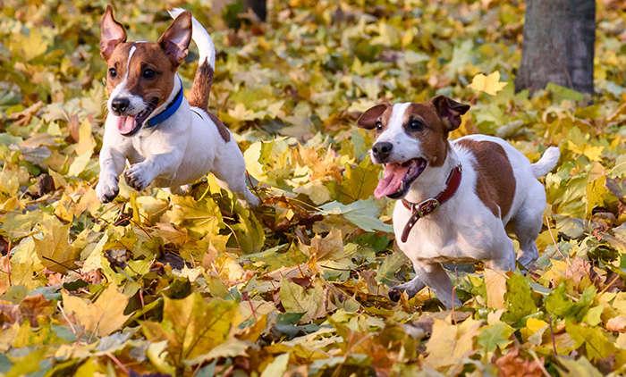 Welche Hunderassen sind die beliebtesten in Deutschand?