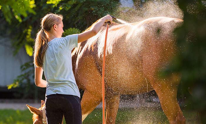 Wie werden Pferde richtig abgeduscht
