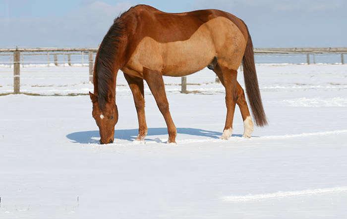 Warum werden Pferde geschoren und was gibt es dabei zu beachten?