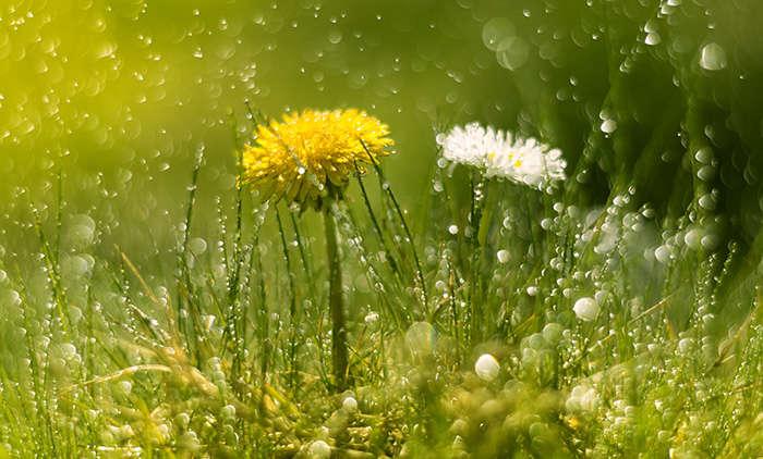 Ein Regenreicher Sommer – was zu tun ist