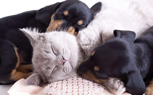 Wie sich Hunde und Katzen verstehen